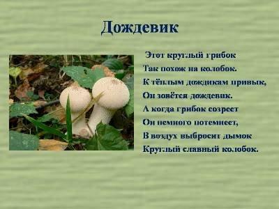 Кто собирал грибы? » Пуз Карапуз | Сайт для детей и родителей